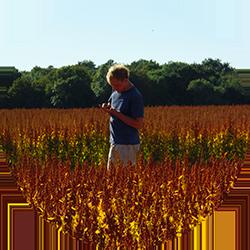 Damien, producteur de quinoa